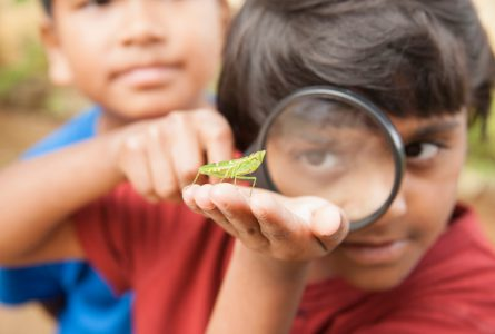 Elementary age boy uses magnifying glass to discover nature.   This curious, student explorer excitedly investigates an insect, which he holds in his hand. His friend is in the background. The children are of Asian, Indian, Latin descent.  Science, education themes.